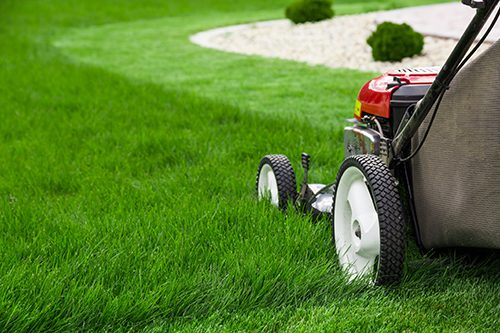 5 Summer Lawn Care Tips to Keep Your Lawn Looking Great